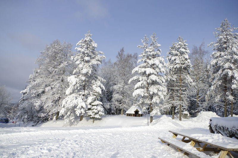 Snow covered trees in Ånnaboda, Örebro in Sweden Sweden Winter No People Copy Space Copyspace Snow Cold Temperature Tree Plant Beauty In Nature Scenics - Nature Nature Tranquility Day White Color Tranquil Scene Landscape Covering Sky Environment Land Field Non-urban Scene Outdoors Snowcapped Mountain Powder Snow