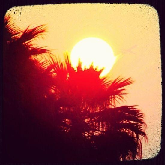 Palm Trees Ave Fenix Castelldefels