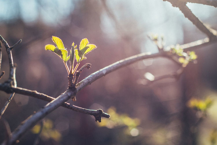 Hope of spring