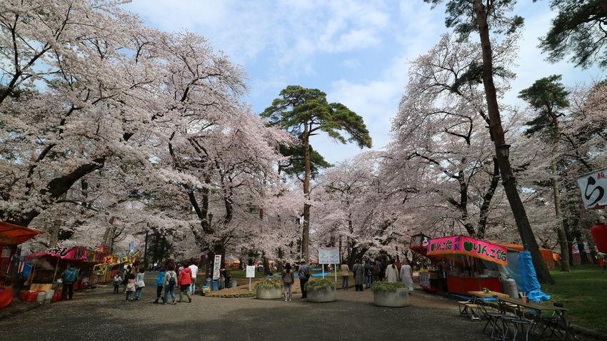 Sakura - Cherry Blossoms - in Omiya Park Beauty In Nature Cherry Blossoms Day Full Bloom Nature Omiya Park Outdoors Outdoors Photograpghy  People Pink Sakura Sky Street Vendors Tree