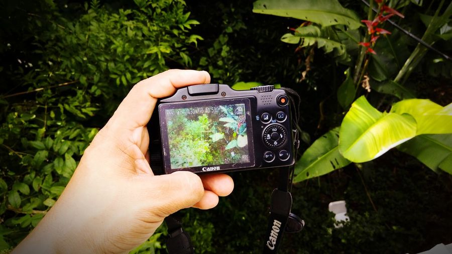 Close-up of hand holding camera phone on plant