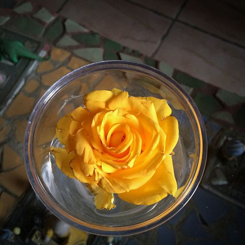 Como la flor. Sola.