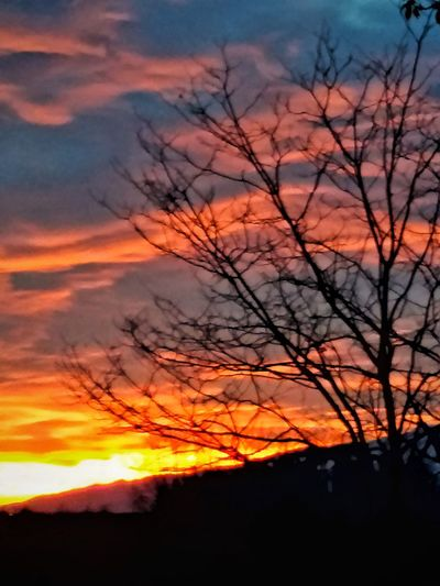 Outdoors Tree Sunset Nature Beauty In Nature Orange Color Tranquil Scene Silhouette Scenics Sky Forest Fire Cloud - Sky Landscape Tranquility No People