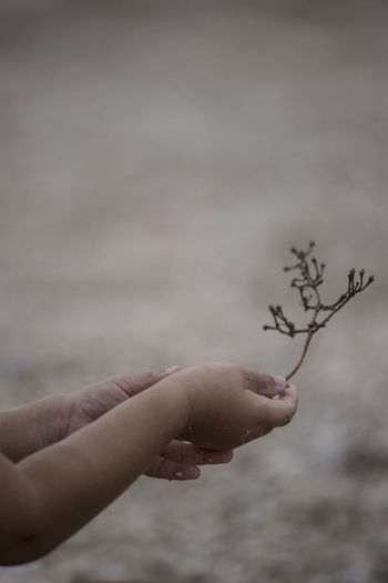 Cropped Hands Of Woman Holding Twig On Field
