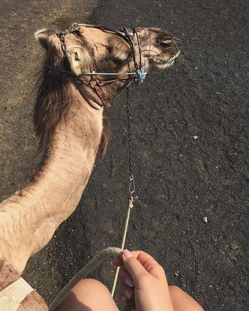 One Animal Domestic Animals Sand Outdoors Human Body Part Day Animal Themes One Person Mammal Close-up People Adult Camel Dromedar Travel Dream