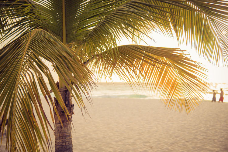 Beach Beauty In Nature Coconut Palm Tree Day Growth Land Leaf Nature Outdoors Palm Leaf Palm Tree Plant Sand Sea Sunlight Tranquil Scene Tranquility Tree Tropical Climate Tropical Tree Water