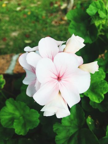 Naturelovers Nature_collection Nature Pinkflowers Pink Beautiful Flowers Flowers_collection The Flowers Series Flower Collection Roses Hello World Hugging A Tree Traveling Chilling Relaxing