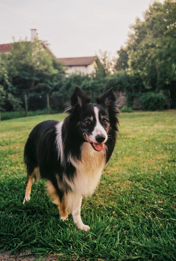 Animal Themes Black Color Close-up Day Dog Domestic Animals Field Full Length Grass Green Color Growth Mammal Nature No People One Animal Outdoors Pets Portrait Tree