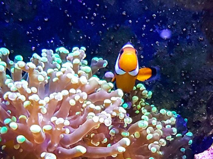 Clown Fish Fish