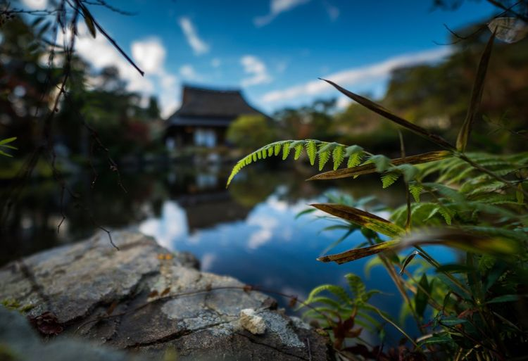 Nature No People Growth Day Outdoors Tree One Animal Animal Themes Close-up Architecture Beauty In Nature Freshness Sky Japan Garden