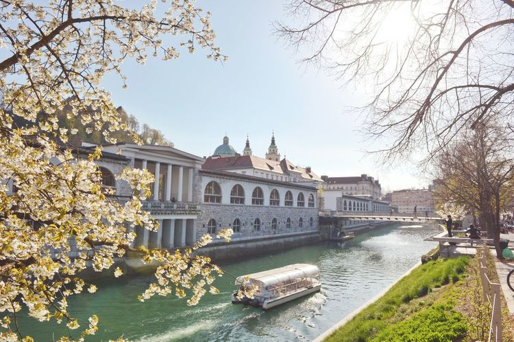 Ljubljana Slovenia Popular Photos Ljubljanica Ljubljana Castle River Boat Blooming Bloom Cherry Blossoms Blossom Spring Outdoors Sunny Geeen Urban Urban Nature Springtime Showcase April Outside Beautiful The Street Photographer - 2016 EyeEm Awards My Commute The Great Outdoors With Adobe The Architect - 2016 EyeEm Awards The City Light