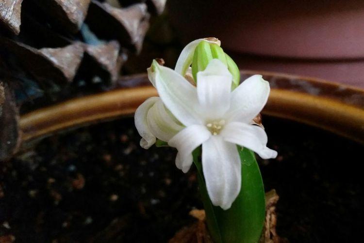 Maximum Closeness White Flower New Born Photography Autumn Bloom Nature Flower Head Plants 🌱 No Edit/no Filter