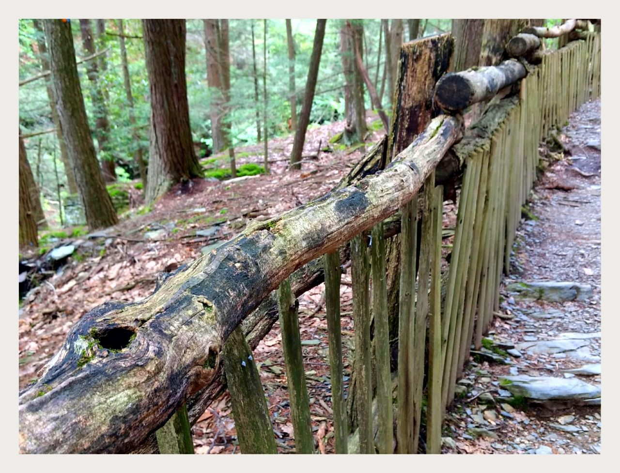 tree trunk, tree, forest, nature, wood - material, outdoors, day, woodland, no people, moss, beauty in nature, close-up