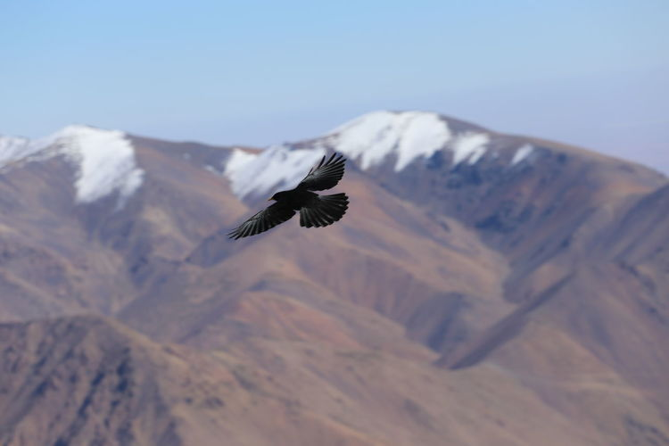 Bird flying over mountains against sky
