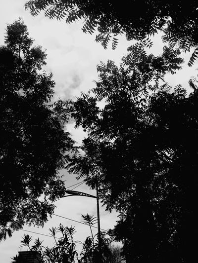 Nature Nature Photography Naturelovers Dawn Pleasant Art Pattern Design Trees Leaves Dusk Evening Shadow Green Patterns In Nature Branches And Sky Branches Noflowers Eyeemselects Shades Blackandwhite Black Cloud - Sky White Tree Water Branch Silhouette Pixelated Sky Close-up