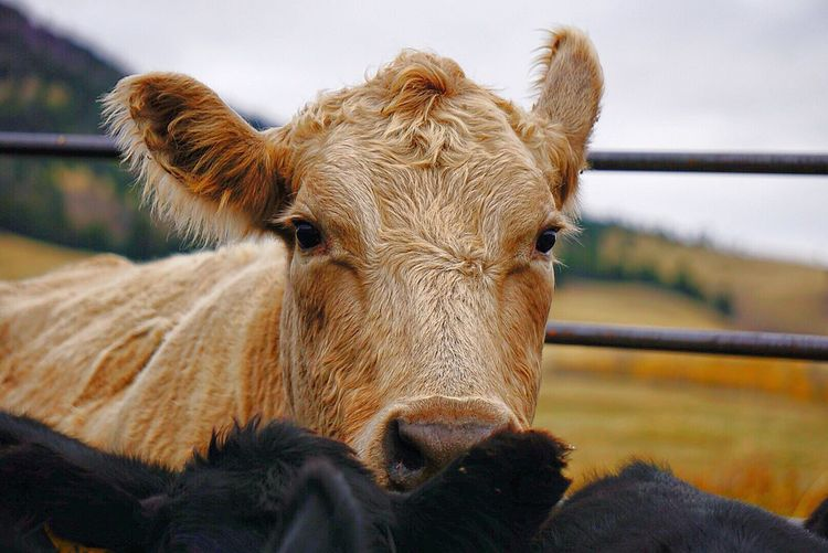Close-up of animal