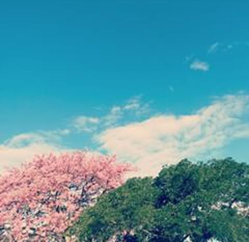 Arvore Naturezaperfeita Paz ✌ Amor Tranquility Deus_Good Fimdetardecolorido