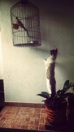 Cat Ninfa Animal Photography Color Portrait