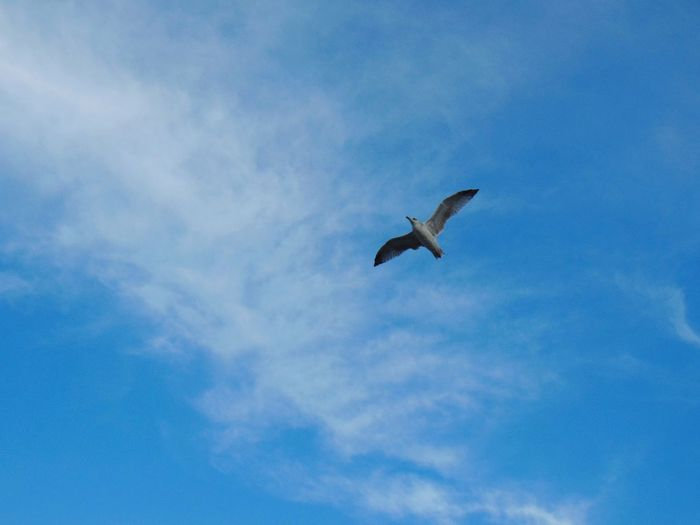 Perspectives On Nature Bird Flying Animal Wildlife Sky Animals In The Wild One Animal Spread Wings Cloud - Sky Low Angle View Outdoors Day Nature Blue Beauty In Nature No People Animal Themes
