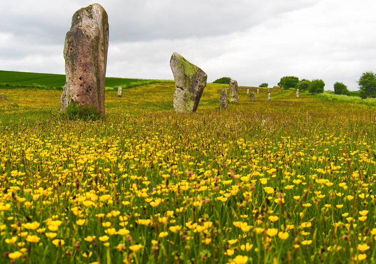 Rural Scene Beauty In Nature Landscape Megalithic Flowering Standing Stones Avebury Springtime EyeEmNewHere