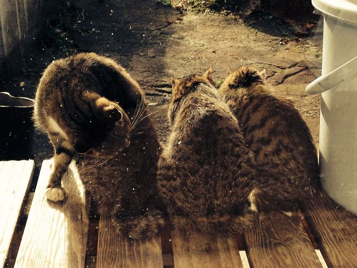 Rear view of three cats sitting on porch