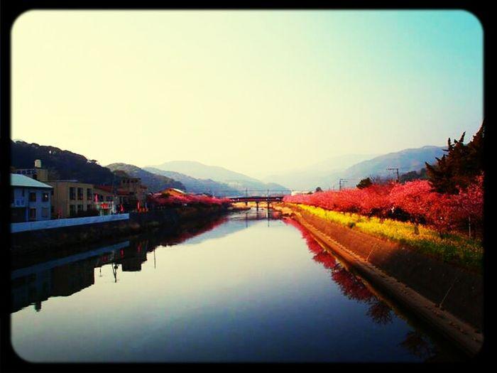 River Nature Cherry Blossoms
