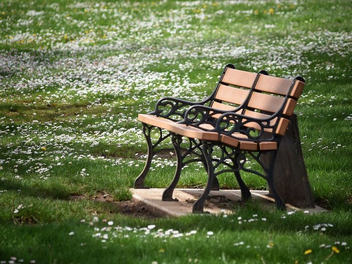 Bench In Grassy Park