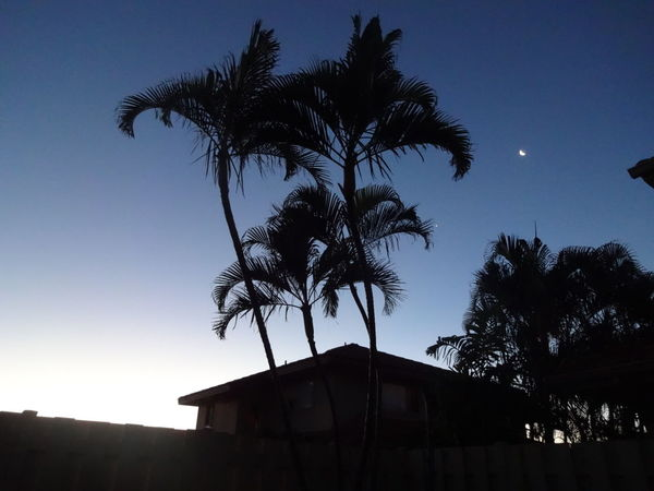 When the Sun bids the night sky Good Morning. Valeriegeephotography Oahu Venturehawaii Sky Night Moon Low Angle View SundayMornings Sunrise Silhouette Sun EyeEmNewHere