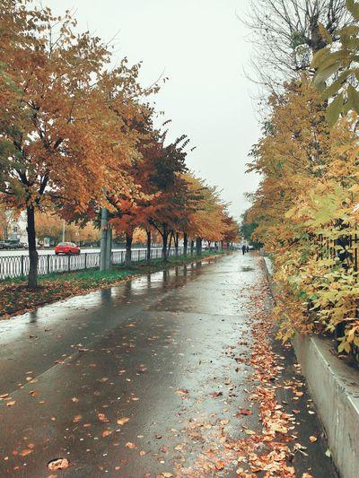 Autumn view Autumn Wet Sky Day Tree Nature Foliage Colors Texture Yellow Colors Of Autumn Asphalt Leaves Trees Perspective Outdoors Rain Rainy Days