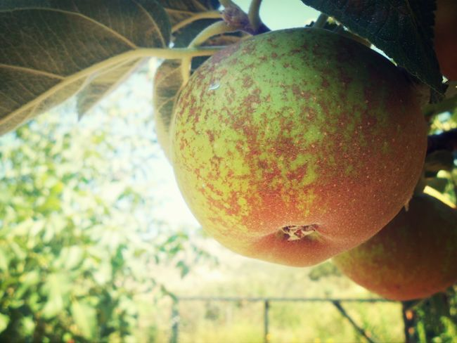 Relaxing Apple