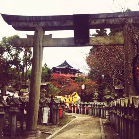 お寺なのに鳥居がある不思議。 朝護孫子寺 奈良 寺 虎 Nara 信貴山 Mountain Temple Lastyearmemory Pray Hello World Driving Autumn Autumn Colors Peace EyeEm EyeEmJapan Tree