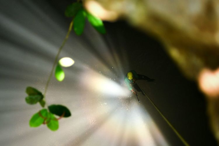 The Light of Heaven 2 Climbing Cave The Light Of Sun Jomblang Cave Insect Spider Leaf Close-up Animal Themes