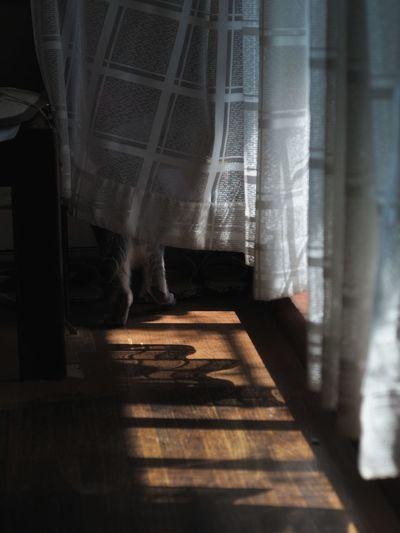 うちの猫 後ろ姿 Four Legs And A Tail My Cat Backshot White Curtain Snapshots of Life Light And Shadow Sunlight Life In Motion My Home Cat Watching EyeEm Cats Lover Taking Photos At Home