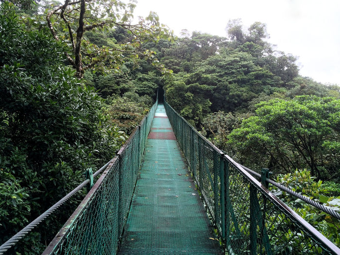 Hanging bridge in Costa Rica Beauty In Nature Bridge Connection Costa Rica Day Diminishing Perspective Footbridge Forest Found On The Roll Green Hanging Bridge Landscapes Long Narrow Nature Feel The Journey Outdoors The Way Forward Tranquil Scene Tranquility Tree Vanishing Point Walkway