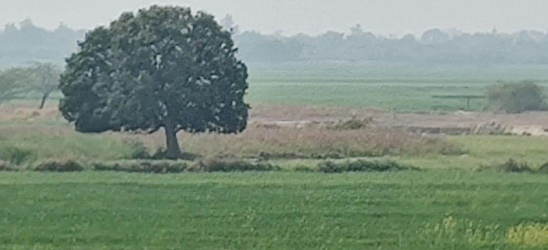 Scenic view of farm