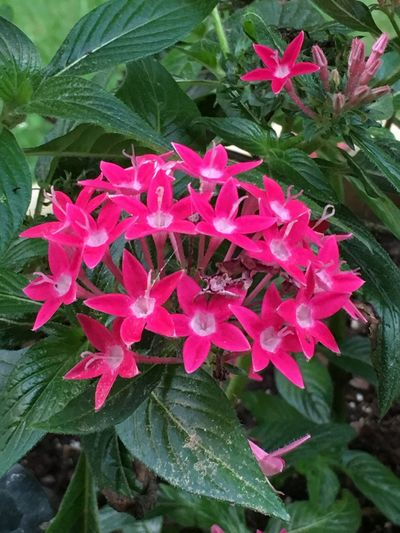 Original Photo Flowerlovers Southbury Ct Pretty N Pink