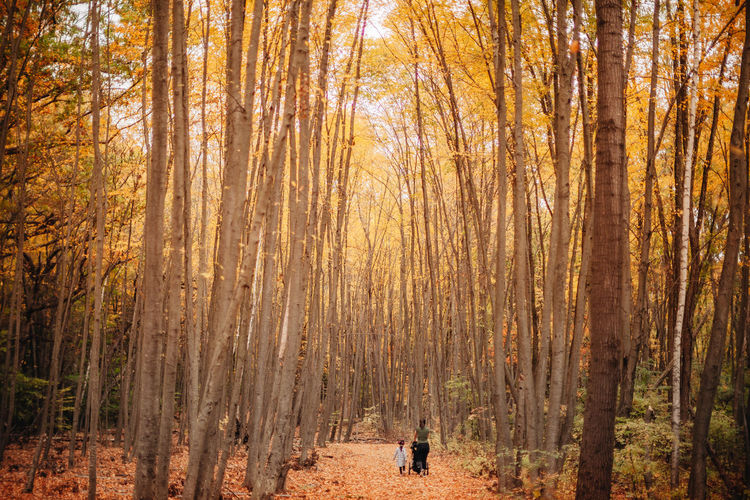 Man walking in forest during autumn