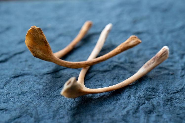 Close-up of animal bones on textured table