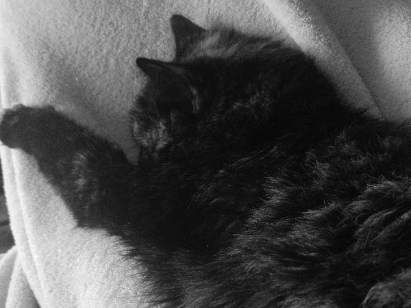 Chat Noir Et Blanc Dodo