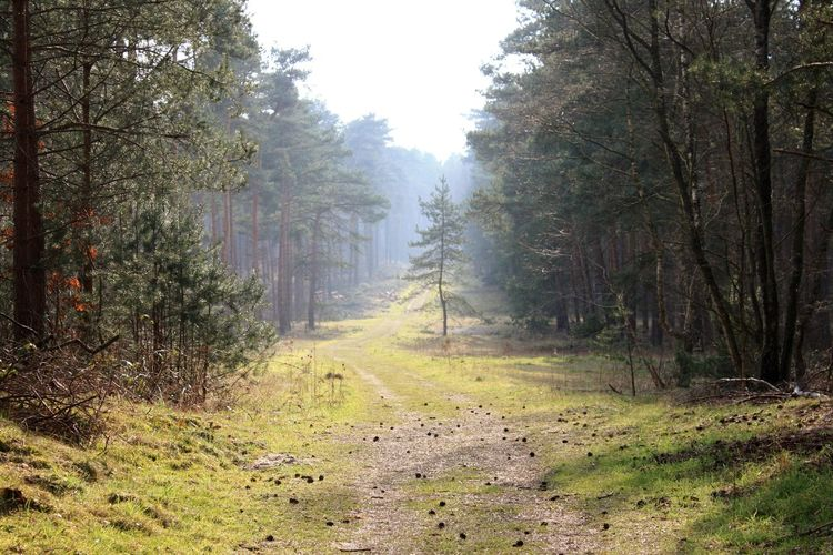 Wood Great Atmosphere Nice View Trees Sunnyday Beautiful Nature Walking Around Ilovethisplace