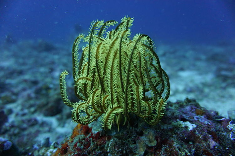 Yellow Sea Fern Nature Sealife Animal Wildlife Animals In The Wild Close-up Coral No People One Animal Sea Sea Fern Underwater Water Wildlife