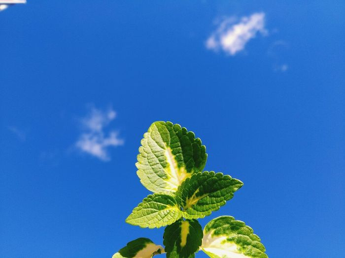 Low angle view of fresh green plant against blue sky