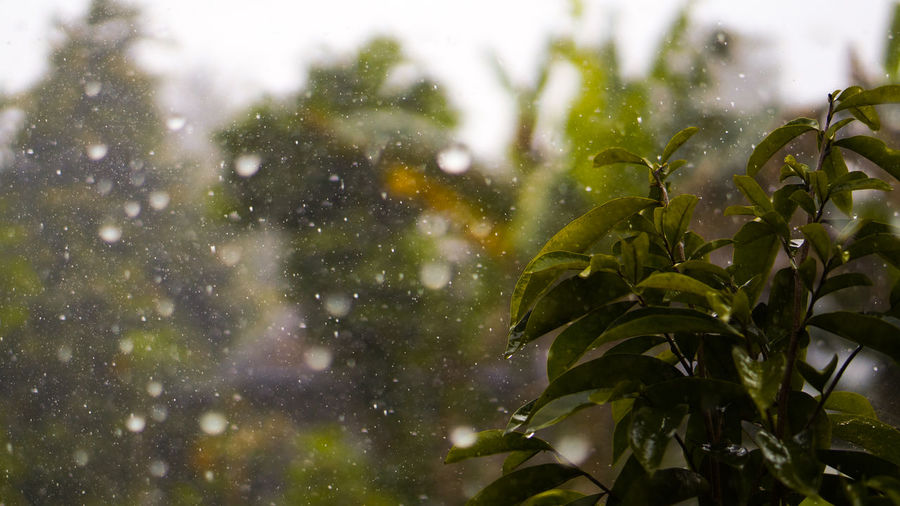 rainsss Leaf Plant Plant Part Nature No People Growth Green Color Focus On Foreground Water Drop Day Wet Outdoors Window Close-up Beauty In Nature Rain Tree RainDrop Snowing Rain Rainy Days
