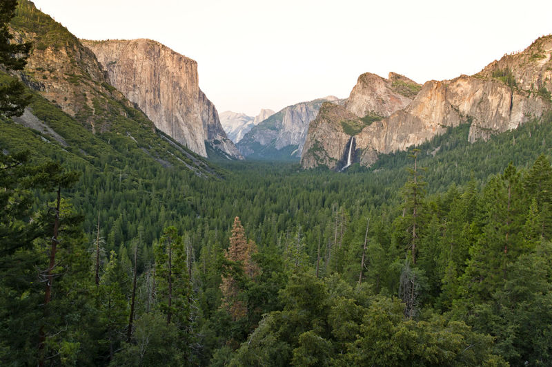 View over a green valley and the famous El Capitan mountain at sunset. El Capitan is a vertical rock formation in Yosemite National Park, California, USA California Climbers El Capitan Hiking National Native Nature Twilight USA Utah Yosemite America Forest Hike Landscape Monolith Mountain No People Park Rock Stone Sunset Tranquility Viewpoint Waterfall