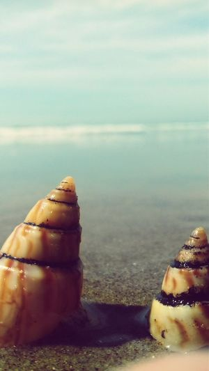Shells🐚 Water
