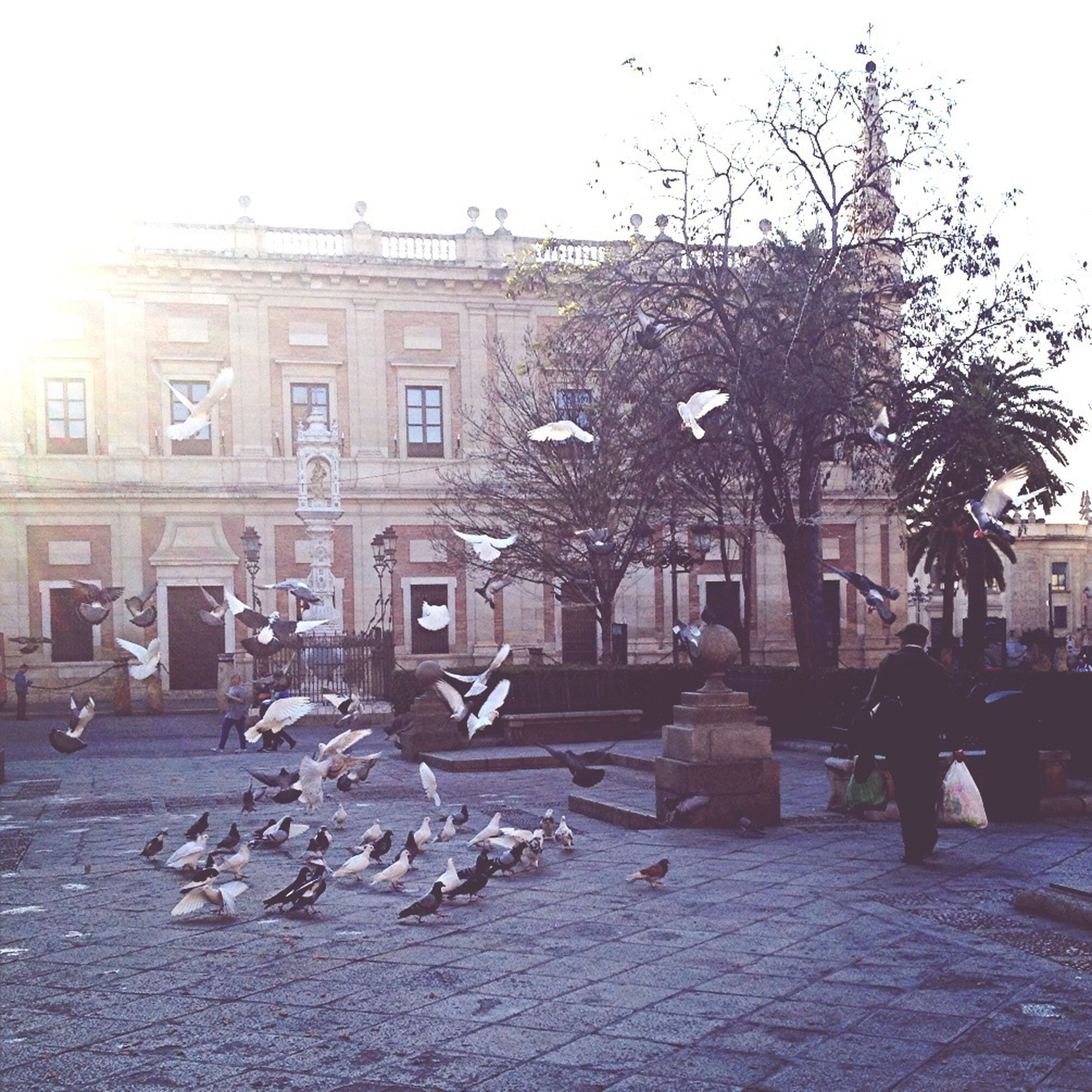 building exterior, architecture, built structure, bird, city, building, clear sky, town square, day, tree, outdoors, sky, statue, incidental people, street, bare tree, large group of people, flock of birds, city life