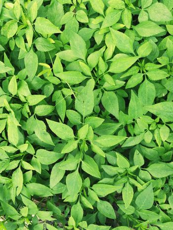 Green cover Vegetable Vegetable Garden Garden Edible  Edible Garden Salad Salad Vegetable Ground Cover Shrubs Green Nature Nature Landscape Backgrounds Leaf Close-up Plant Green Color Green Leaves Young Plant Relaxing Moments Droplet Greenery Plant Life Leaf Vein Growing Grassland