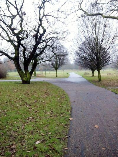 London 2017 London Regents Park Park Bare Tree Branch Flower Clear Sky Water Sky Grass