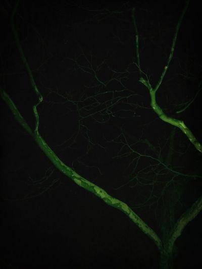 Night Taking Photos Hulk Tree Turn Your Lights Down Low