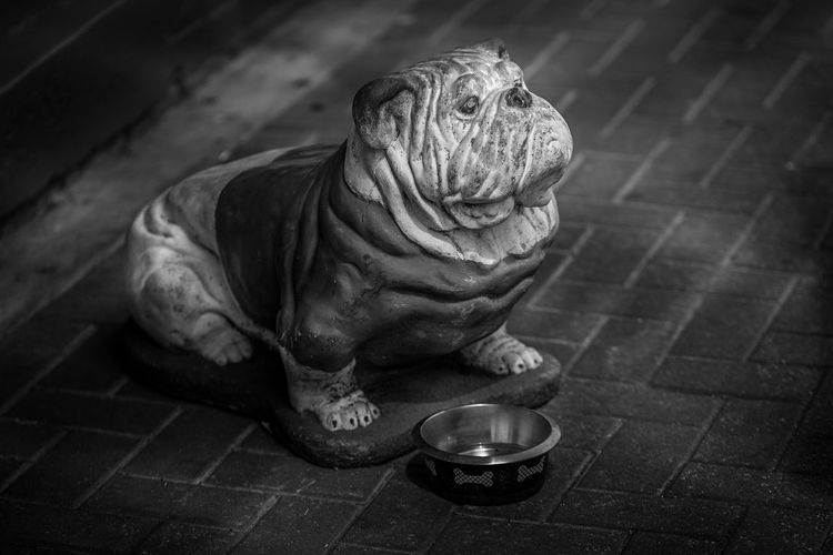 Bulldog Statue in B&W with Complex Lighting Art Art And Craft Creativity Day Floor Flooring Footpath Full Length High Angle View Human Representation Indoors  No People Paving Stone Relaxation Sculpture Sidewalk Sitting Statue Sunlight Tiled Floor